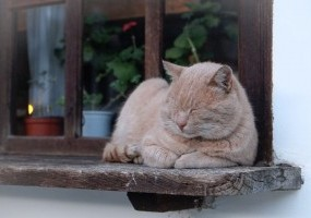 ​How to Keep Unwelcome Cats Out Of Your Home