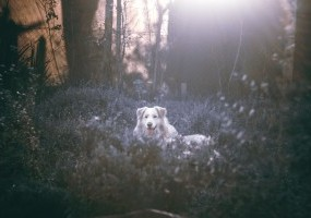 ​Alabama Rot: What Pet Owners Need To Know