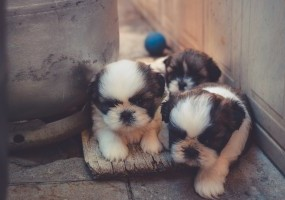 ​Advice For Dog Breeders: How To Hand Rear Puppies
