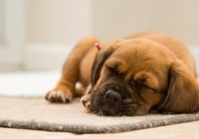 Understanding Your Dog's Sleeping Patterns: